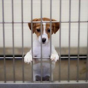 puteti salva vieti adoptand un animal