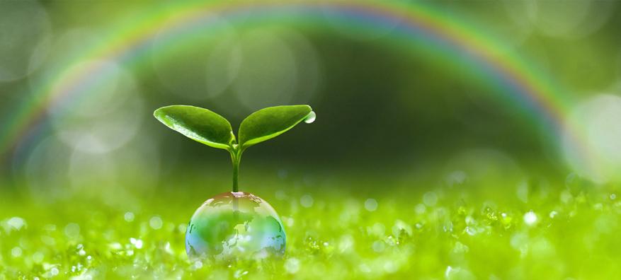 Impactul pe care il avem asupra mediului - I